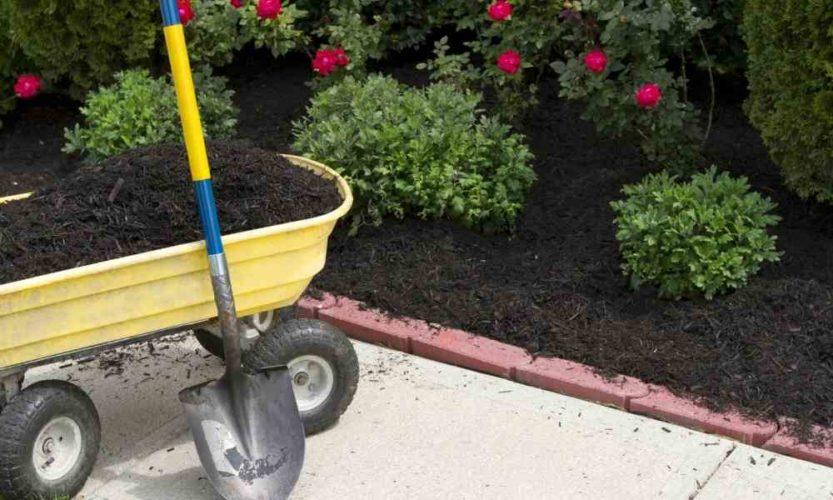 Landscaping Design for Beginners