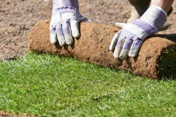 Landscaping Do-It-Yourself Ideas