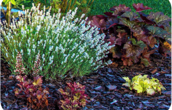 Fastest Growing Evergreen Shrubs for Shade and Shady Landscapes