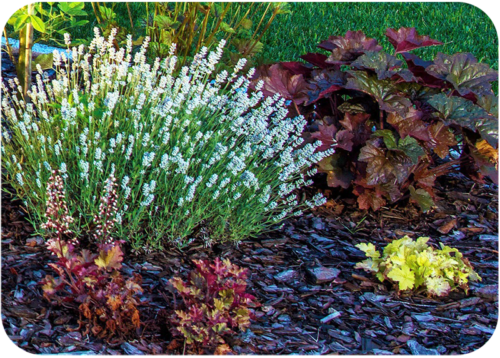 different color plants that work together