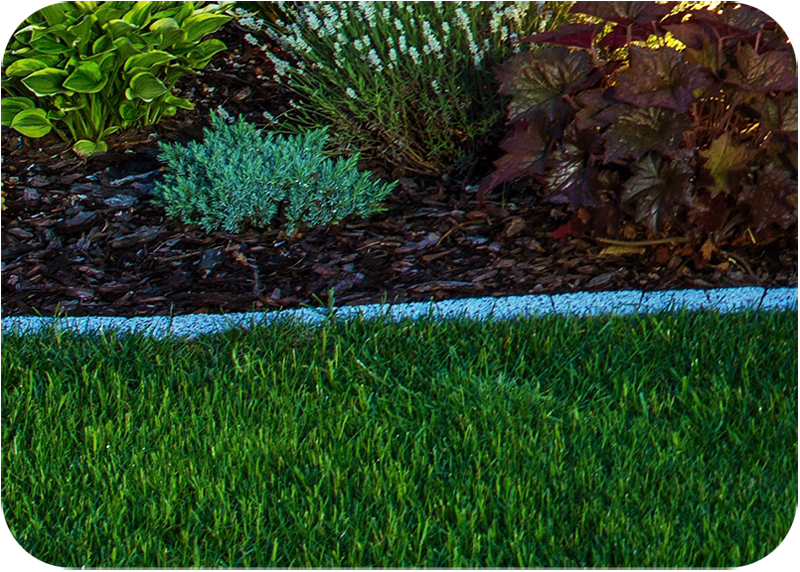 dividing line between the garden bed and the lawn