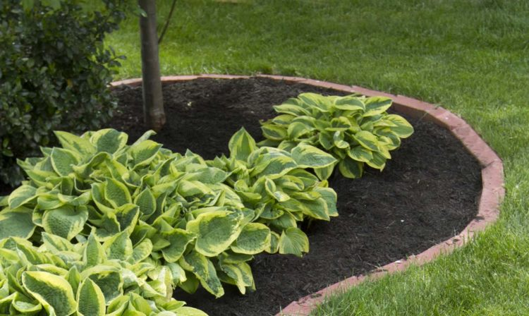 Weed Matting Secrets: How to use Landscaping Fabric?