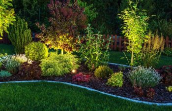 Best Backyard Landscaping Ideas for a Beautiful Garden All Year Round